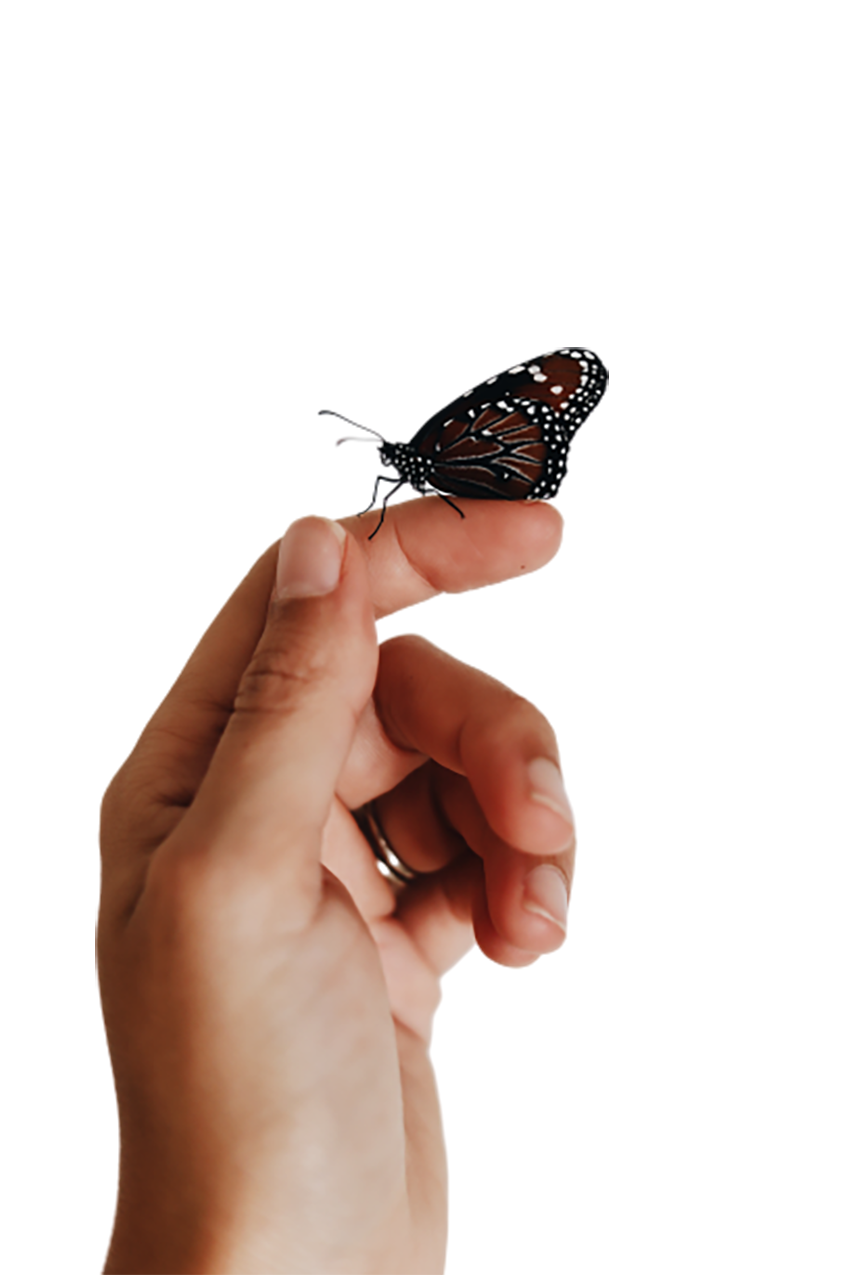 Butterfly sitting on hand transparent background PNG