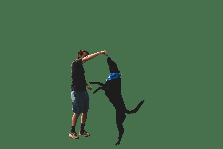 Handsome man feeding his dog transparent background.png