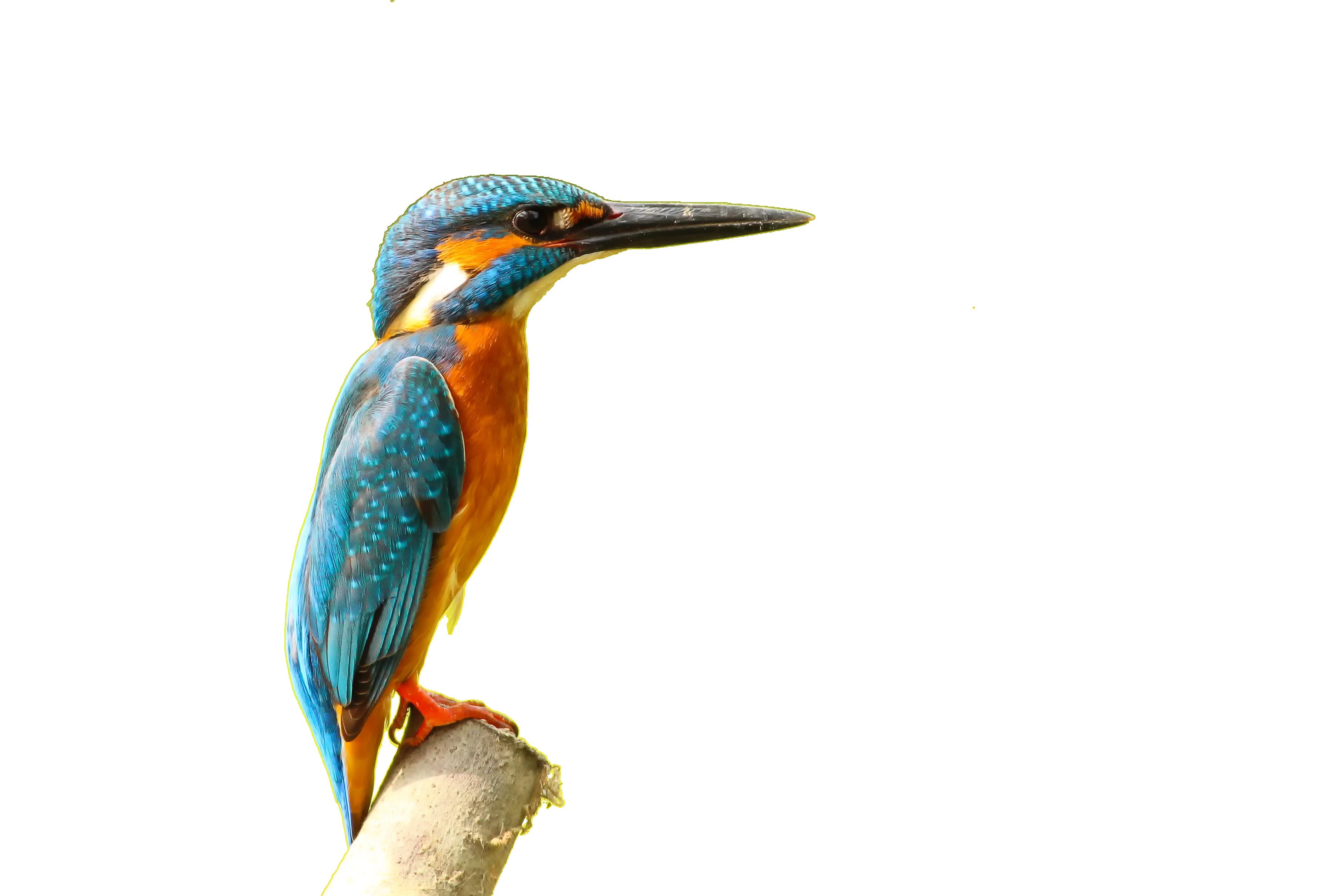 Blue And Orange Color Bird Transparent Background PNG