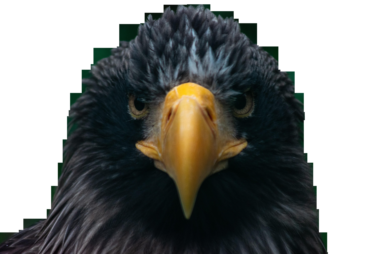 Black Eagle Front Transparent Background PNG