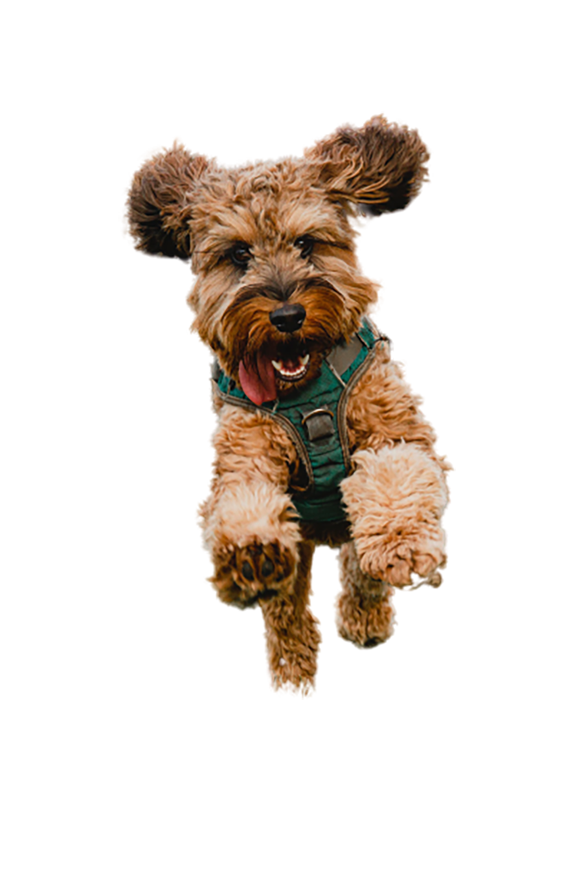 Excited Cute Pet Dog transparent background PNG