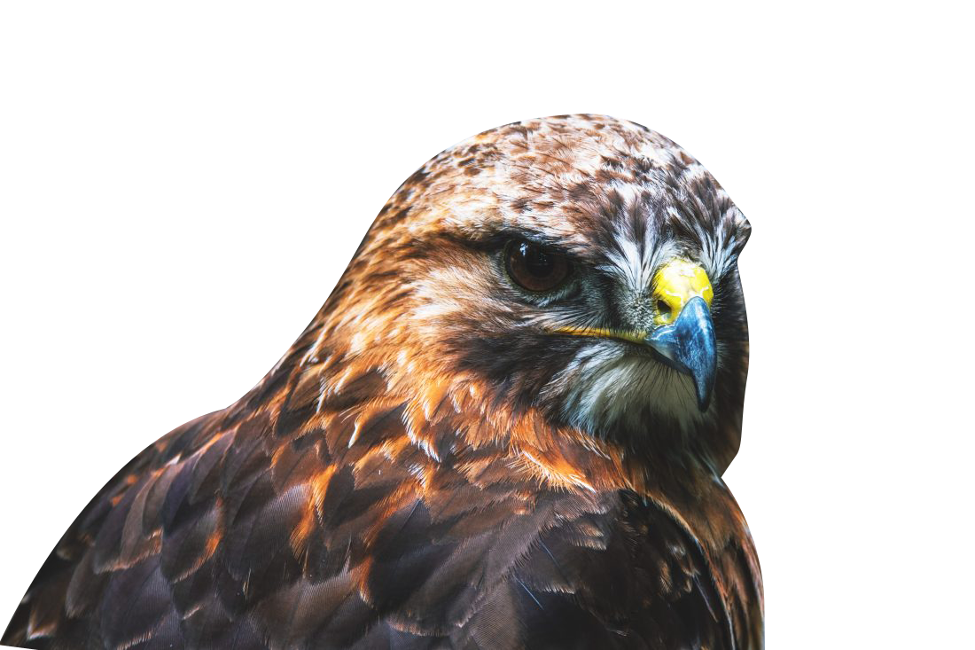 Brown Eagle Transparent Background PNG