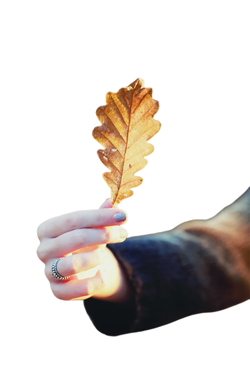 Brown dry leaf in hand transparent background PNG