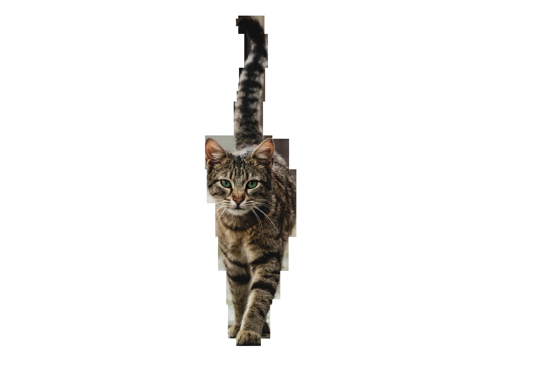 Cat Walking Transparent Background PNG
