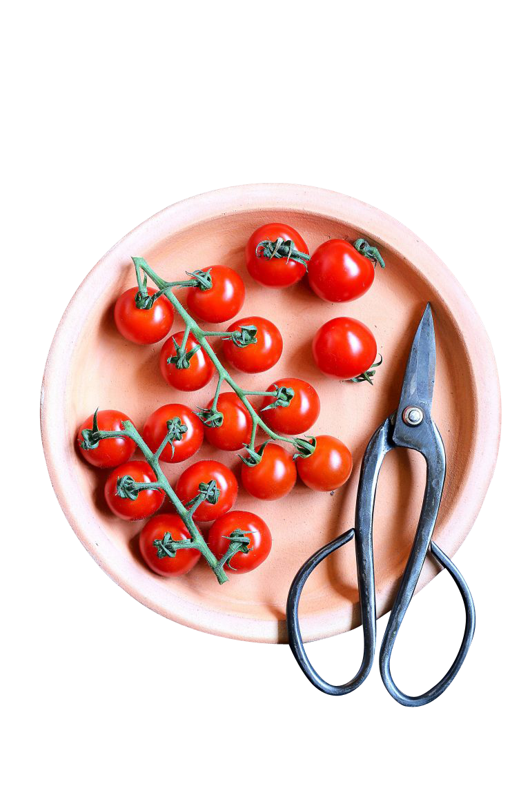 Cherry Tomatoes Transparent Background PNG