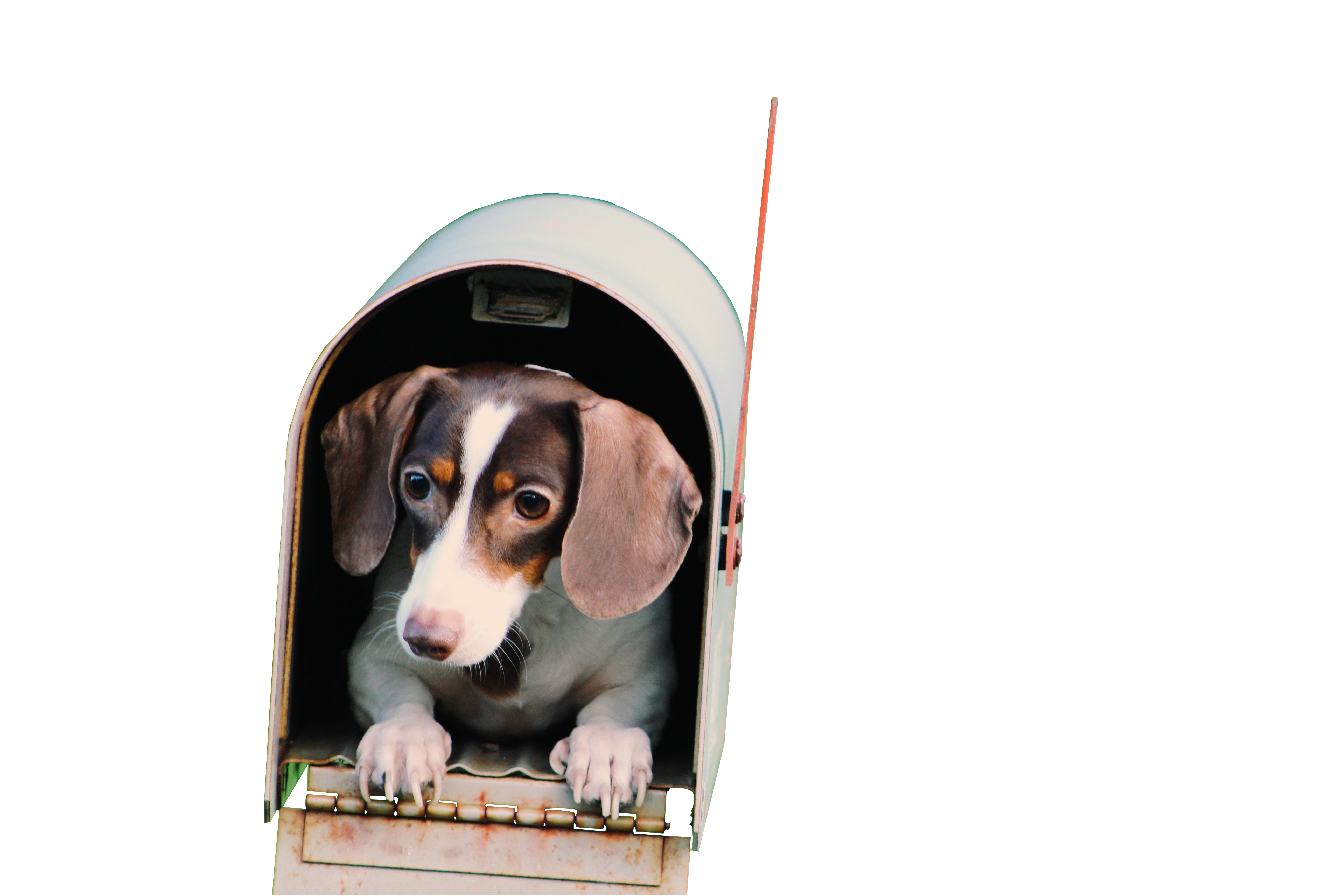 Brown Color Dog in Cabin with Transparent Background PNG