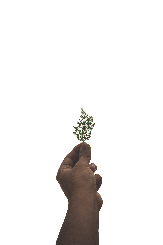 A Leaf in Man